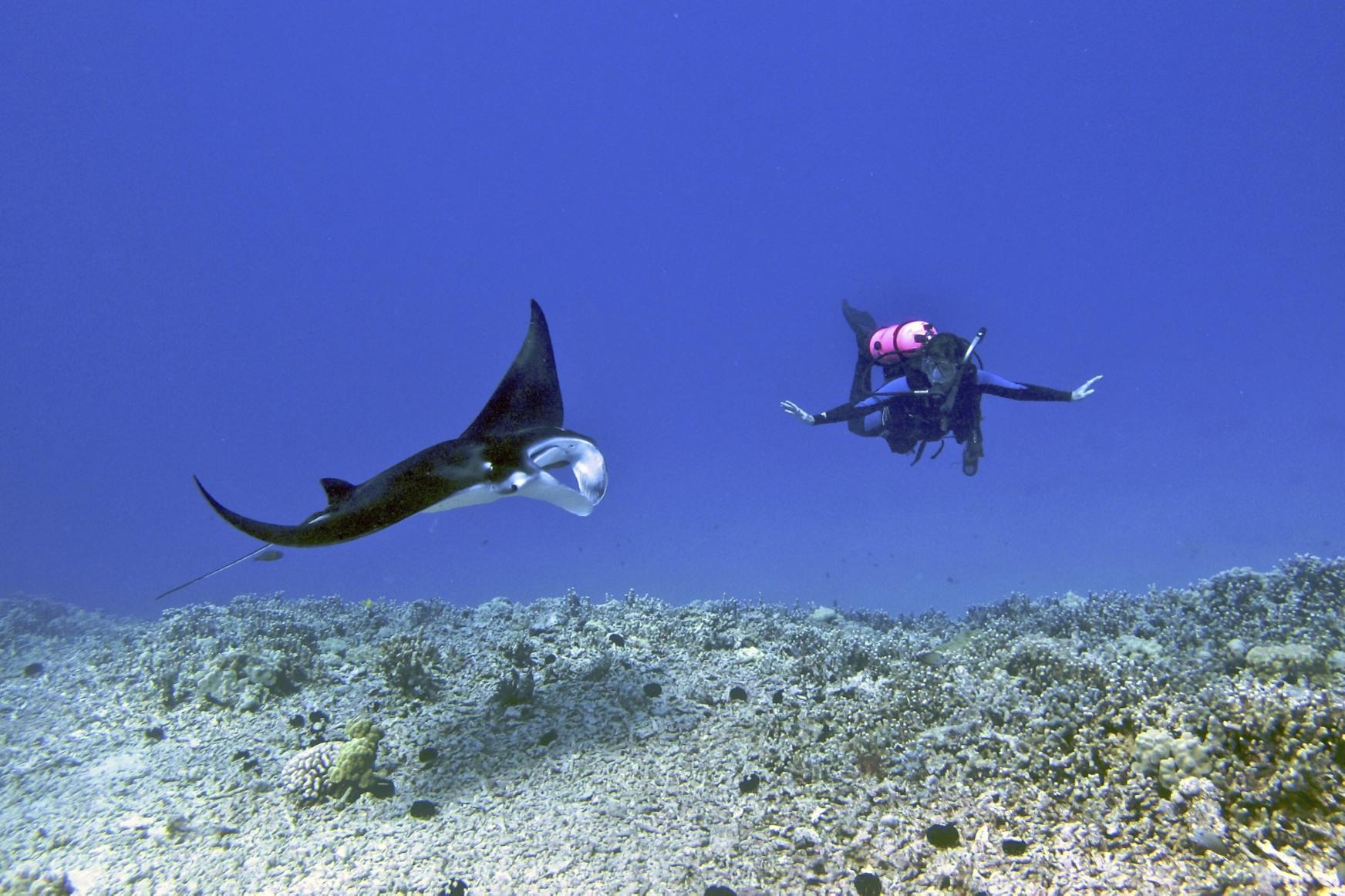 Kona Manta Ray Diving